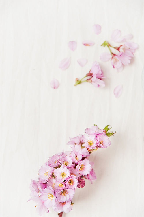 macarons-primavara-05