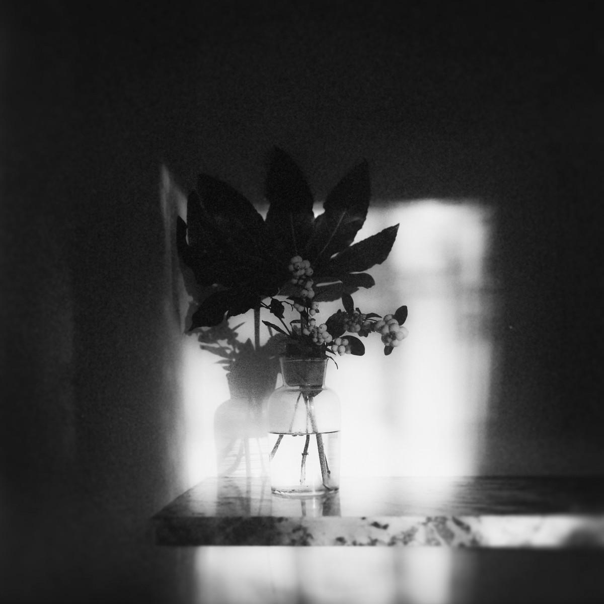 a-flower-02